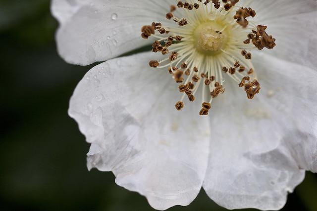 inside a blossom