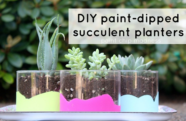 diy paint-dipped succulent planters tutorial by paint chip madness