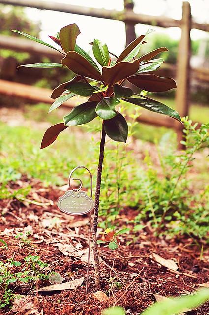 tree 7.12 (1 of 1)