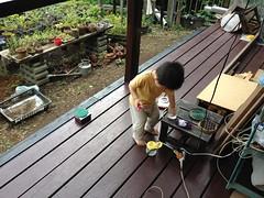 ウッドデッキのとらちゃん (2012/7/15)