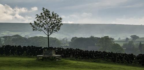 1317 Tree