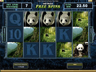 Untamed - Giant Panda Free Spins