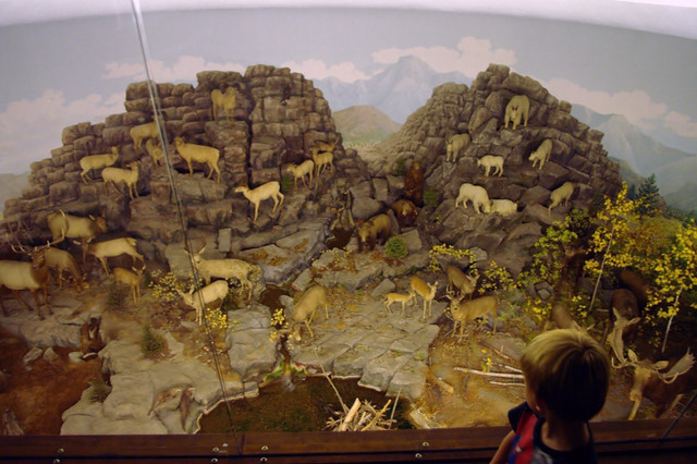 Dyche Natural History Museum
