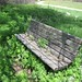 Poison Hemlock Growing through Park Bench by barbsbooks