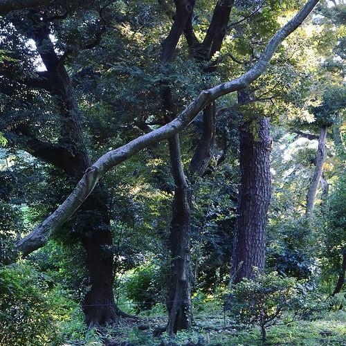 木々 #東京都庭園美術館