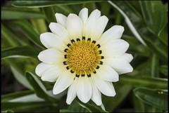 I love white flowers-3=