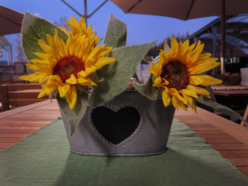 sunflower googles