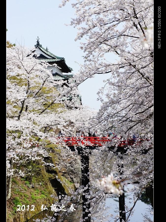 2012 日本東北追櫻記 (東北第一櫻~弘前城)