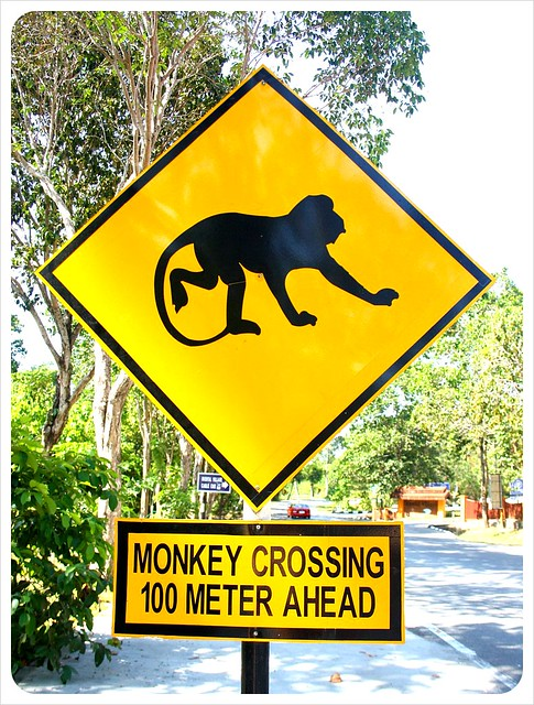 langkawi monkey crossing