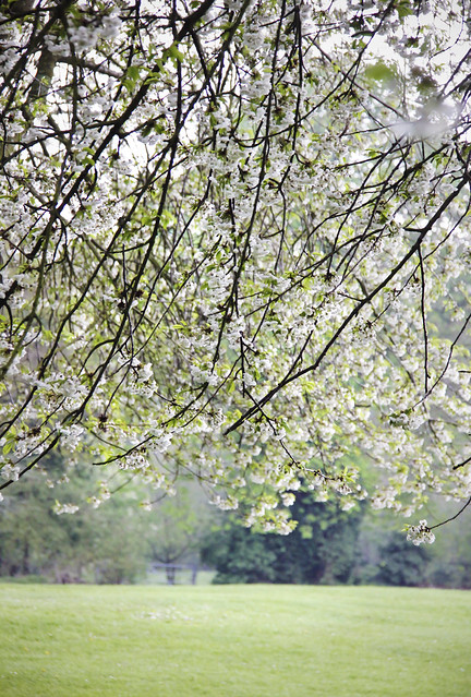 Wendover- green