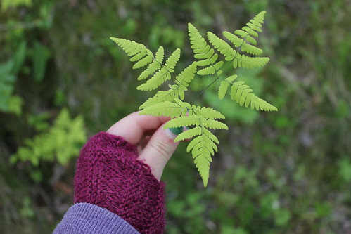 Ferns by Regnboge