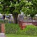 Hoorn-20120518_1588