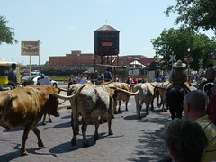 Cattle Drives #4