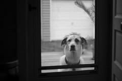 Dog. A.