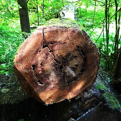 Large Stump