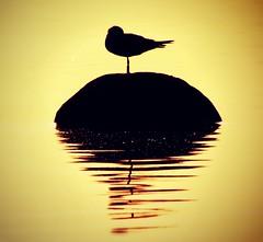 [フリー画像素材] 動物 2, 鳥類, シルエット ID:201206300400