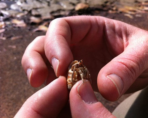 A hermit crab says hello :)