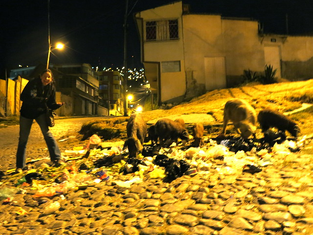 Karen and pigs on the streets of La Paz