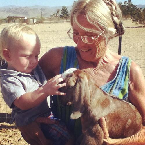 ollie goat big