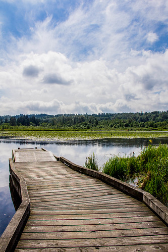 Piper Spit Pier in Burnaby Lake