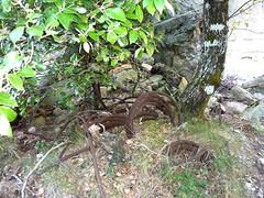 Remontée du Carciara : restes de câbles métalliques le long du chemin après le canyon