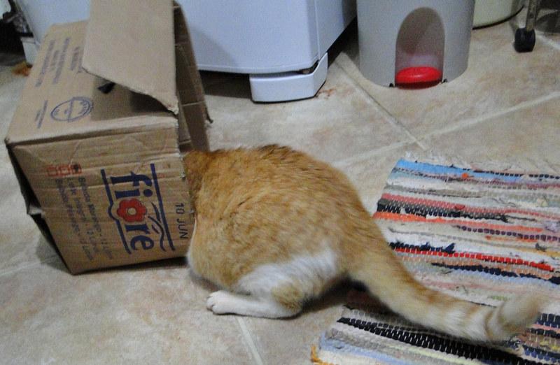 O Grande Gato Cabeça de Caixa