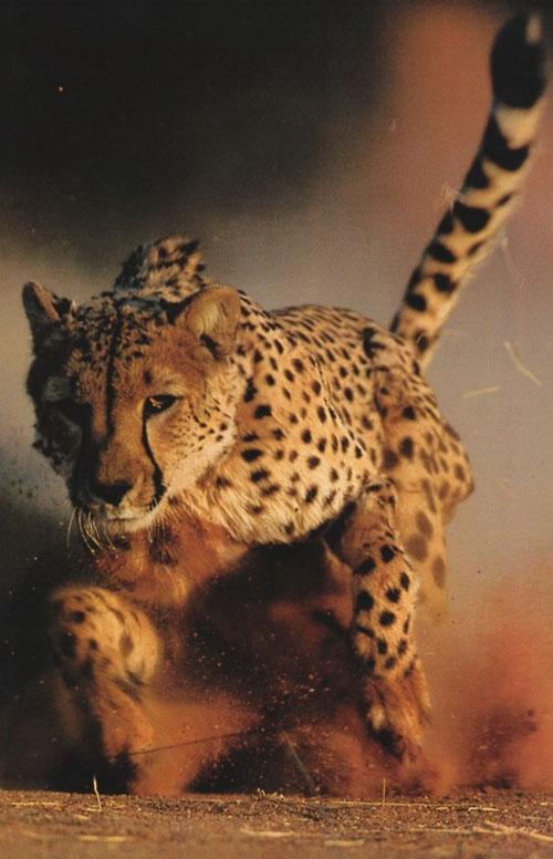 big-cats-091
