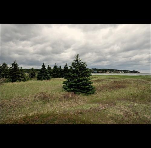 sea canada tree beach grass nikon novascotia earth gimp boardwalk nikkor hrm cowbay rainbowhaven coleharbour digikam 1685 d5000 halifaxregionalmunicipality 1685mm nikkor1685 nikkor1685mm nikond5000