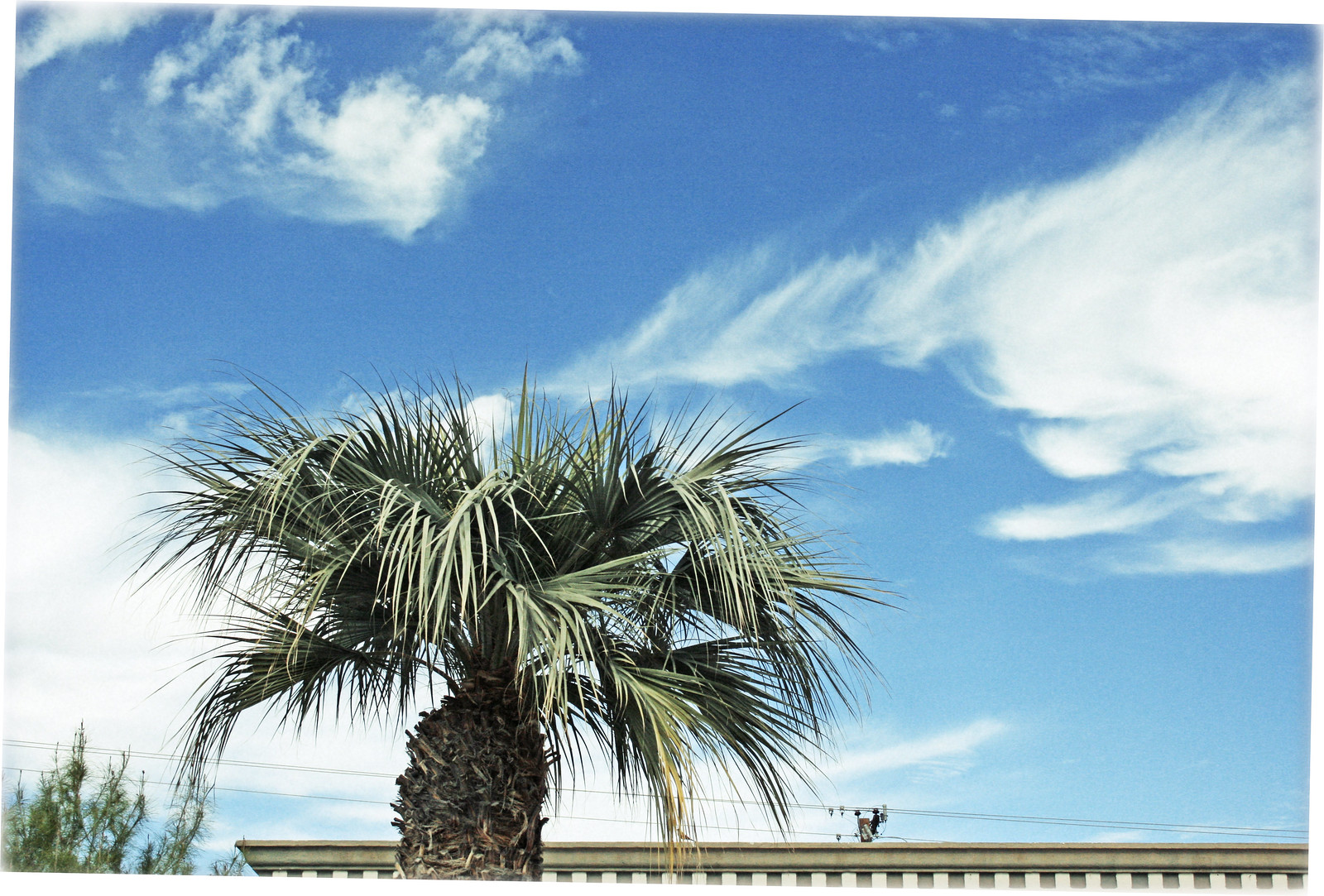 Palm Tree, Electric Lines and Clouds, Scottsdale
