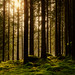 Small photo of Forest moment