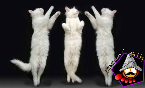 gambar kucing 10