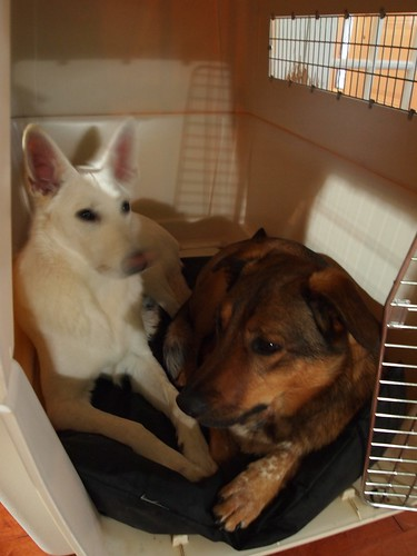 Maggie & Denny in the crate