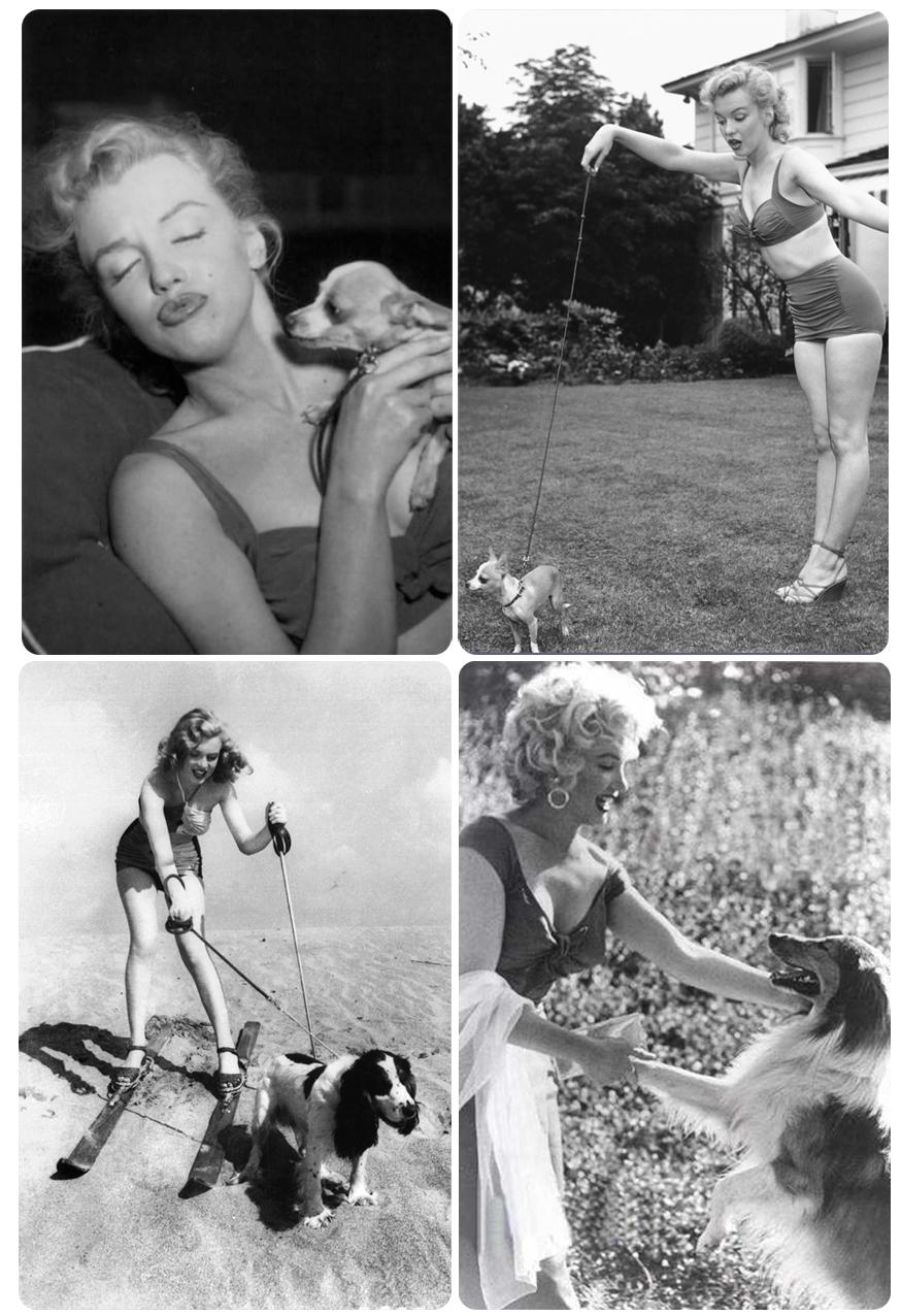 Marilyn Monroe & dogs