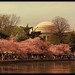 Tidal Basin & Jefferson Dome