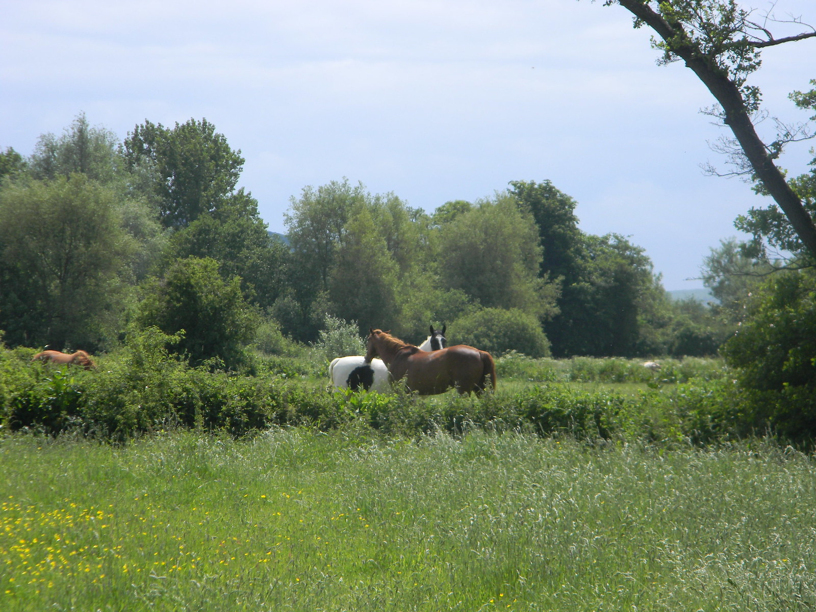 Horses Uckfield to Lewes
