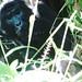 Photo © I do Africa