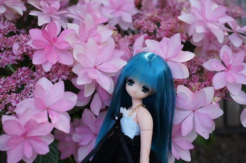 hydrangea festival with MIU
