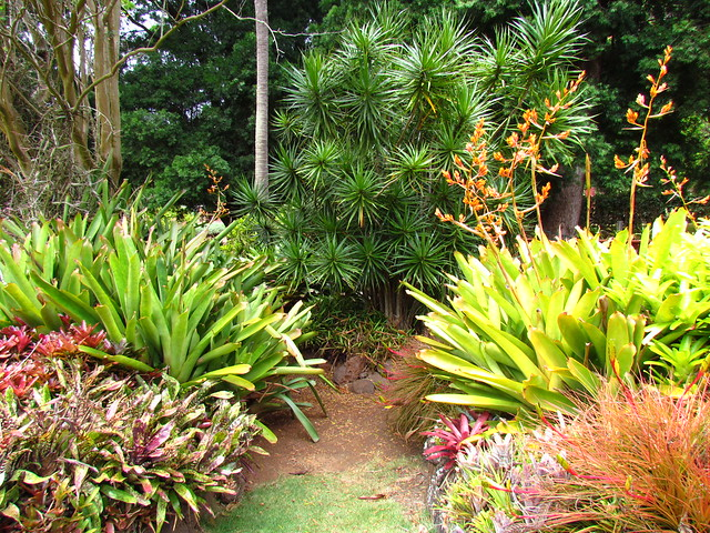 Allerton garden flickr photo sharing - National tropical botanical garden ...