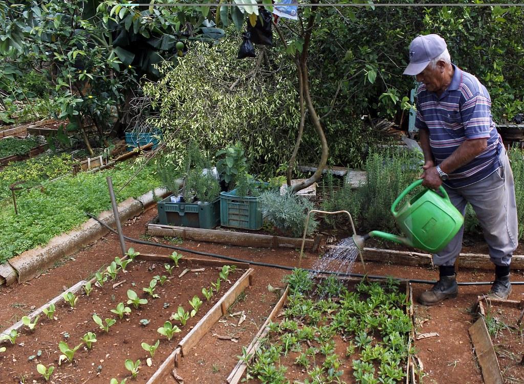 Kubanischer Kleingärtner - Symbolbild | Bildquelle: http://www.ipsnoticias.net/2012/06/agricultura-cuba-cultivos-adaptables-frente-al-cambio-climatico/ © IPS /Ivet Gonzalez | Bilder sind in der Regel urheberrechtlich geschützt