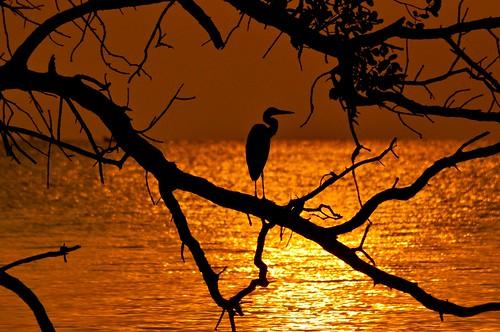sunset silhouette crane johor muar thegalaxy westmalaysia muarriver colorphotoaward mygearandme