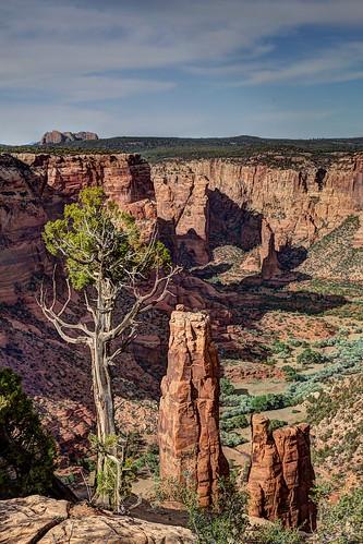 Tree & Spider Rock Overlook