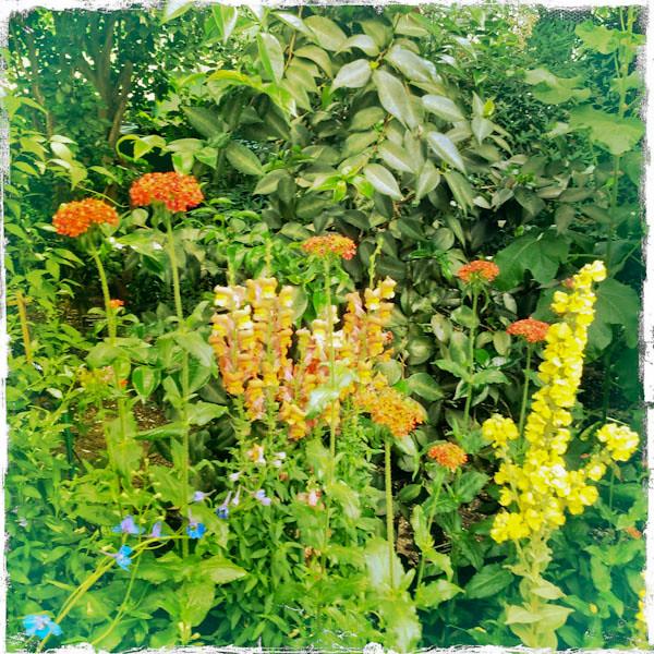 Monet's Garden at NYBG