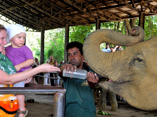 Feeding a Baby Elephant at the Pinnawala Elephant Orphanage