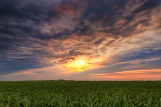 Cornfield Sunset