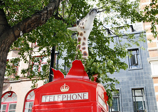 Giraffe phone box