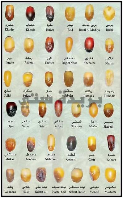Toutes les variètés de dattes au Maroc