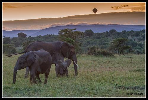 africa elephant sunrise kenya hotairballoon riftvalley maasaimara colorefexpro niksoftware