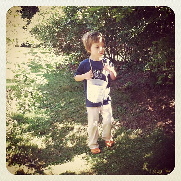 Dono, however, was the perfect picker- he LOVED picking blueberries, but had NO interest in eating them.