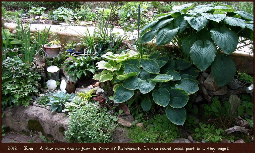 Mini Water Garden 3
