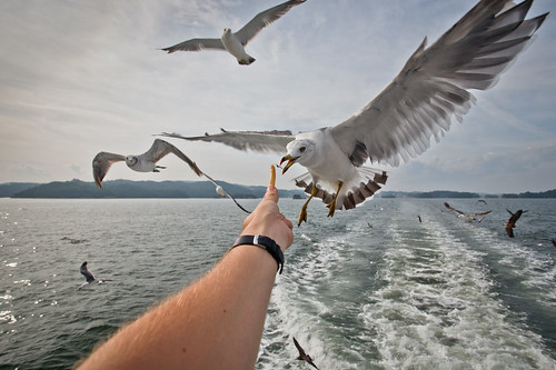 Birds at 17mm by industar